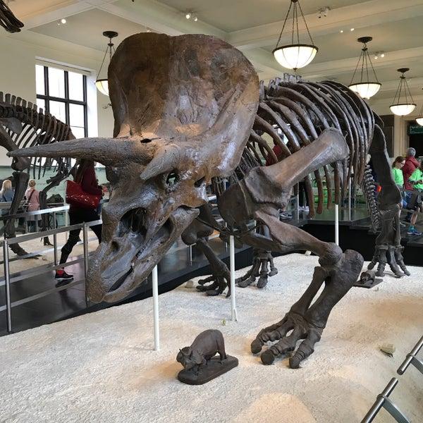 Photo taken at David H. Koch Dinosaur Wing by Akiles M. on 5/25/2017