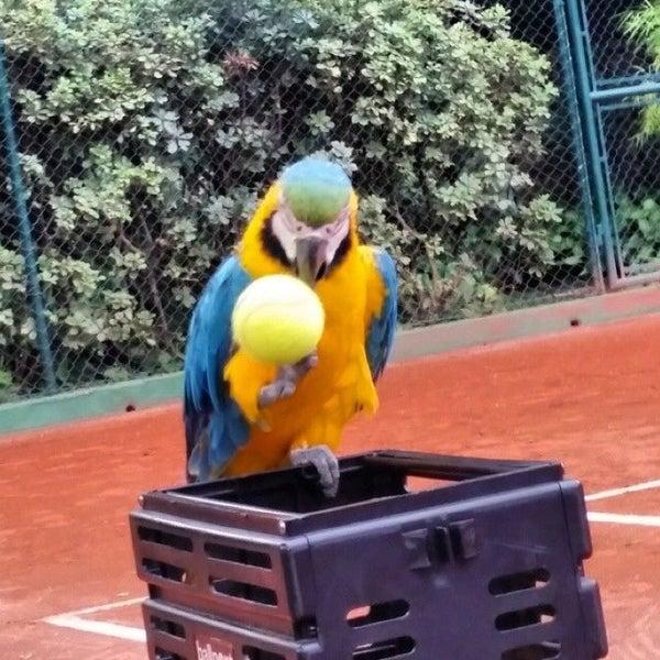 Photo taken at Central Park Tennis Club by Чекин Ч. on 7/6/2014