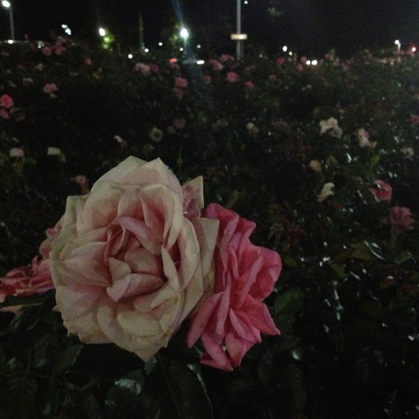 5/16/2013에 Jess L.님이 Light Square에서 찍은 사진