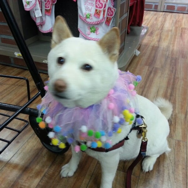 Photo taken at Petco by Kyle Willow B. on 3/16/2013
