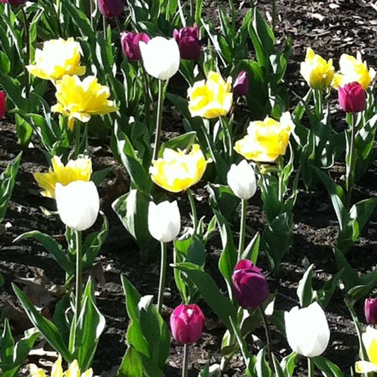 Photo taken at Cantigny Park by Denise K. on 4/4/2012
