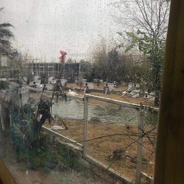 2/16/2018 tarihinde Ö💤lem Tozarziyaretçi tarafından Nallı Bahçe At Çifliği'de çekilen fotoğraf