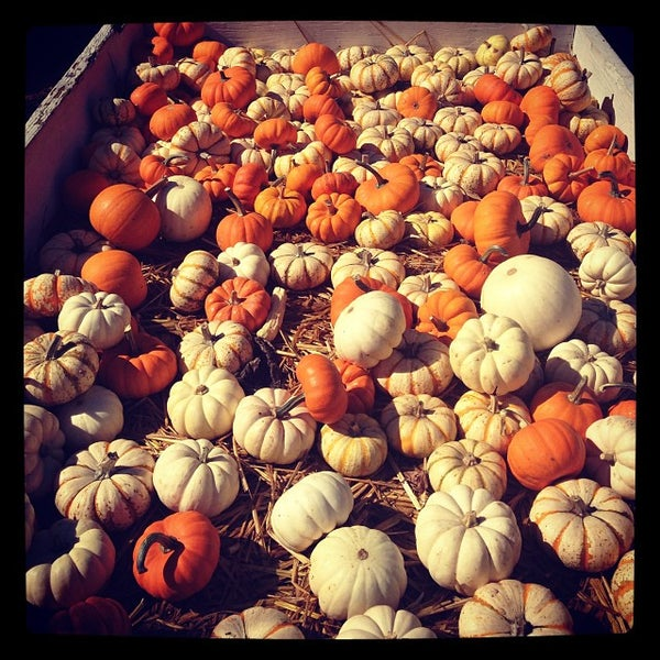 Photo taken at Clancy's Pumpkin Patch by Cristina C. on 10/19/2013