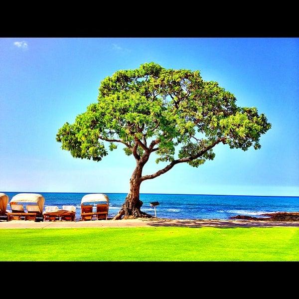 Beach Tree Hualalai 35 Tips From 919 Visitors