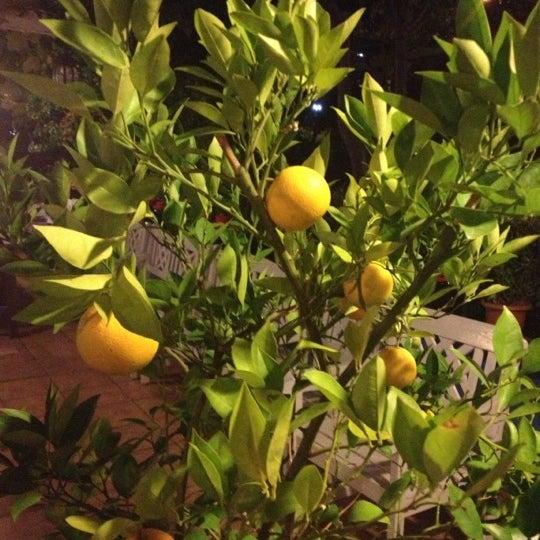 11/16/2012 tarihinde MURAT U.ziyaretçi tarafından Maria'nın Bahçesi'de çekilen fotoğraf