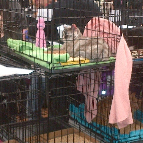 Photo taken at Petco by Stephen L. on 2/2/2013