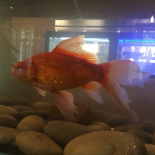 Здесь есть даже золотые рыбки! Говорят, они исполняют желания!))