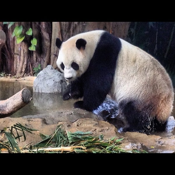 Photo taken at Xiang Jiang Safari Park, Guangzhou by Fred W. on 10/25/2012