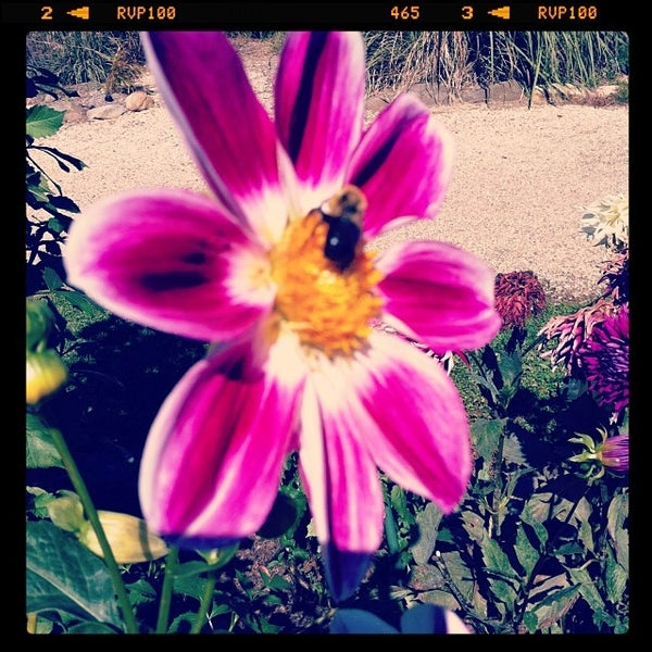 Photo taken at Planting Fields Arboretum by André D. on 10/1/2013