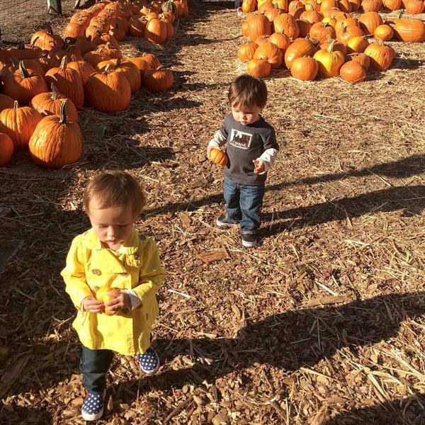 Photo taken at Clancy's Pumpkin Patch by Matthew L. on 10/11/2015