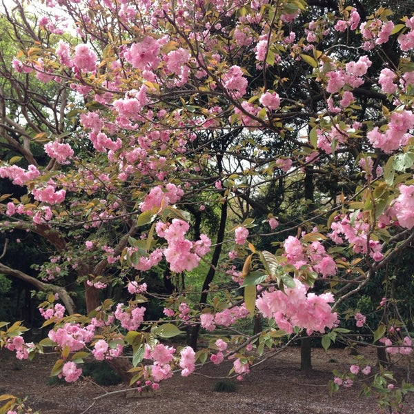 Photo taken at Shinjuku Gyoen by Chris L. on 4/6/2013