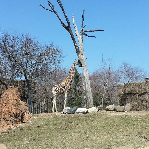 Photo taken at Lincoln Park Zoo by Shana S. on 4/7/2013