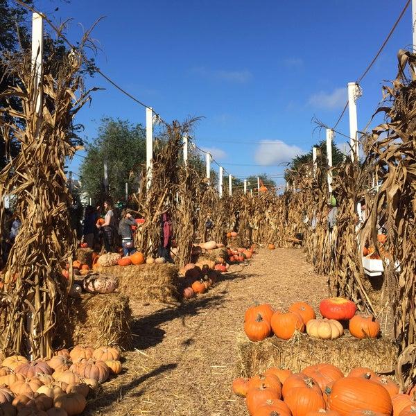 Photo taken at Clancy's Pumpkin Patch by Lauren S. on 10/25/2015