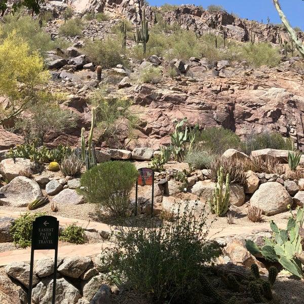 Atlanta Garden Of Bill Hudgins: The Phoenician Resort Cactus Garden