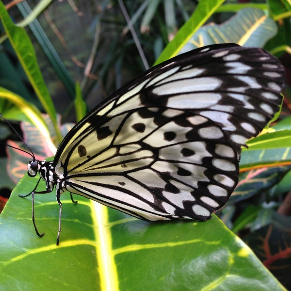 Victoria Butterfly Gardens 8 Tips