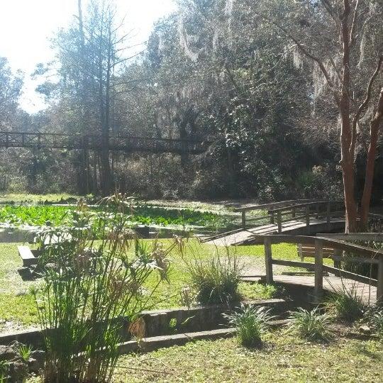 Photos at Ravine Gardens State Park - Palatka, FL