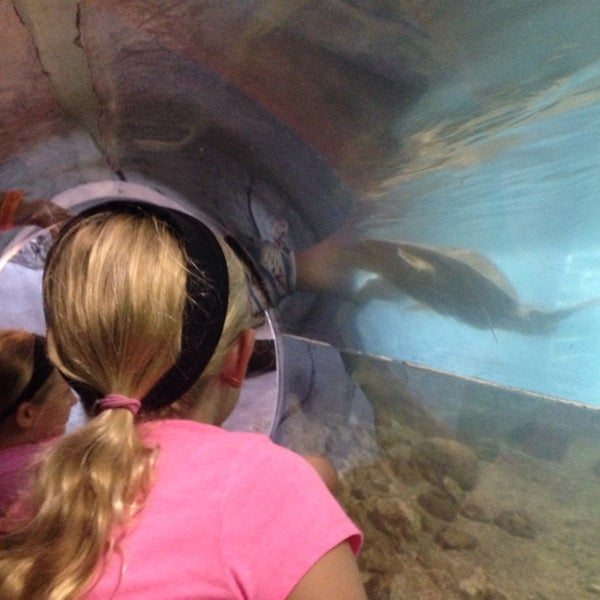 World Aquarium Downtown West 5 Tips From 195 Visitors