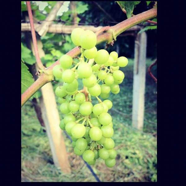 Photo taken at Lampang Vineyard by Jesada K. on 8/25/2012