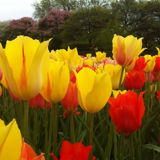 Photo taken at Cantigny Park by Paula R. on 4/7/2012