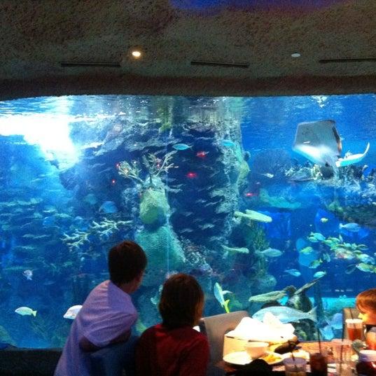 Aquarium Restaurant 55 Tips From 2790 Visitors