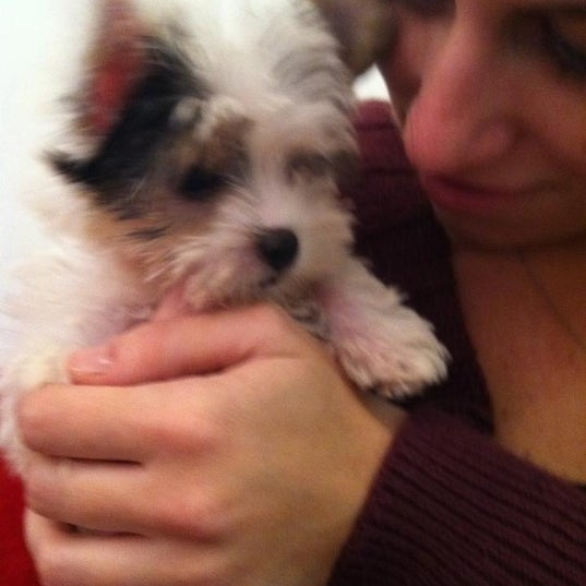 Best Dog Store For Puppies Chicago