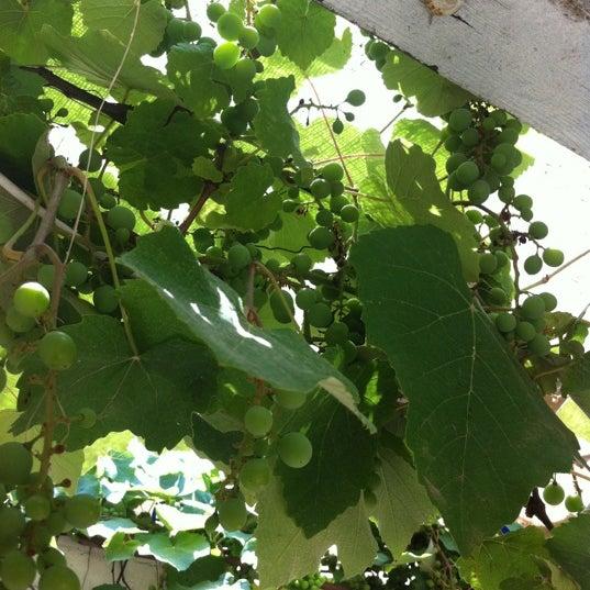 7/10/2012 tarihinde Hakan C.ziyaretçi tarafından Maria'nın Bahçesi'de çekilen fotoğraf