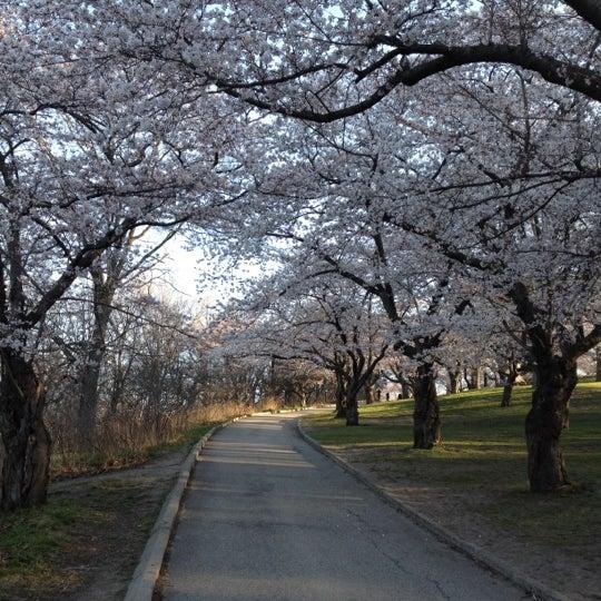 4/12/2012 tarihinde Anil P.ziyaretçi tarafından High Park'de çekilen fotoğraf