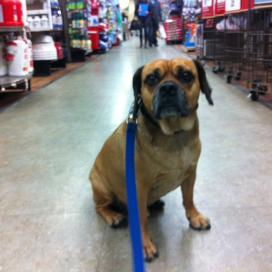 Photo taken at Petco by Max B. on 3/9/2012
