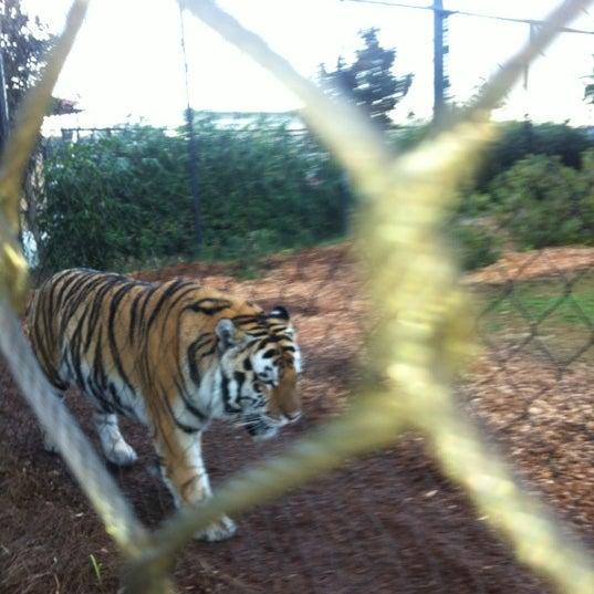 Photo taken at LSU - Mike's Habitat by Sarah Y. on 12/29/2011
