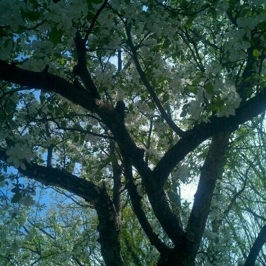 Photo taken at Island Park by Daren D. on 5/2/2012