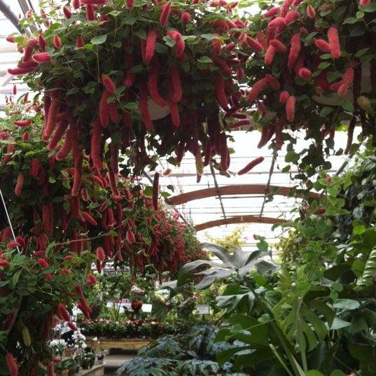 Westbury Gardens Christmas: Hicks Nurseries, Inc.