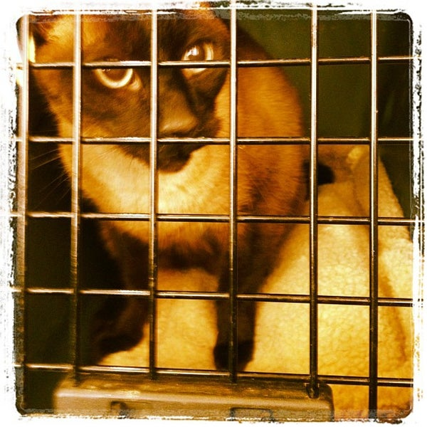 Photo taken at Aloha Animal Hospital by Will R. on 3/28/2012