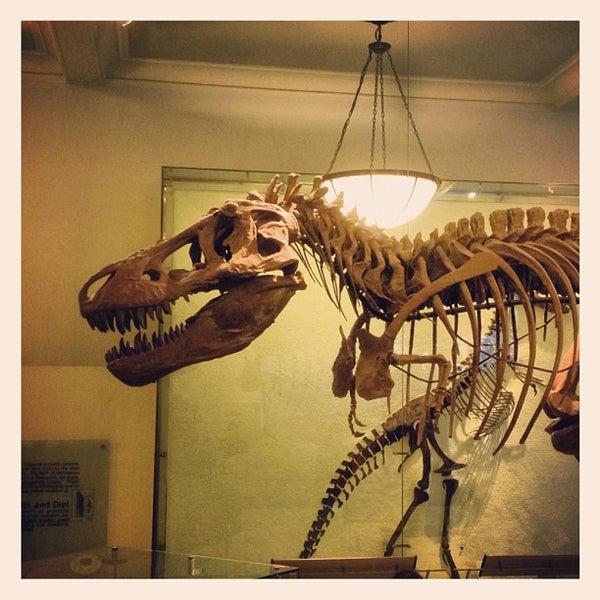 Photo taken at David H. Koch Dinosaur Wing by Donald B. on 3/13/2012