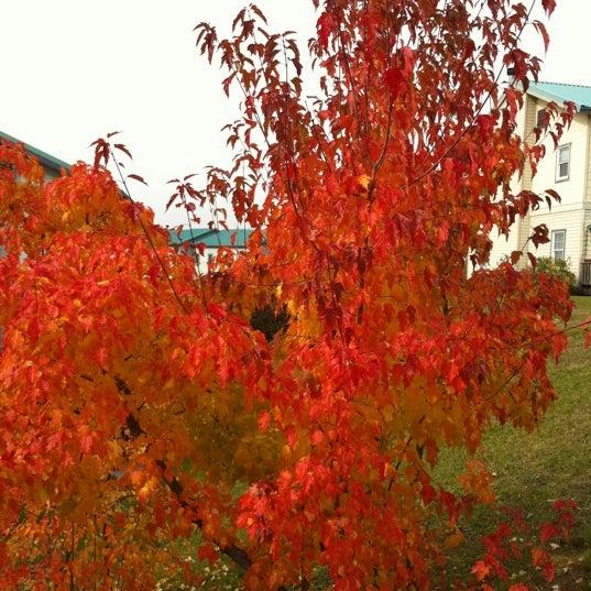 Снимок сделан в Рабочий поселок Зима пользователем 👻Alexey 10/22/2011