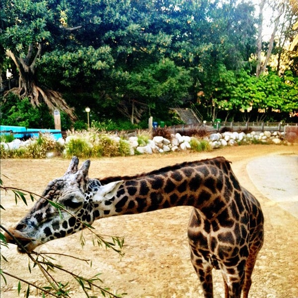 Los Angeles Zoo And Botanical Gardens Zoo In Los Angeles