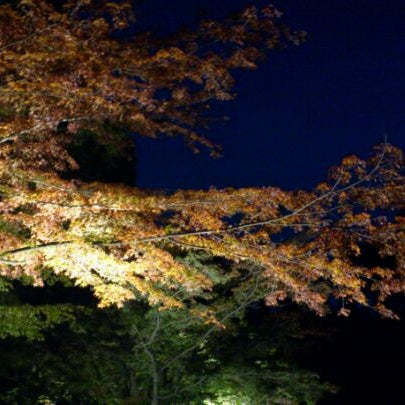 Photo taken at もみじ谷 by Yoshiki T. on 11/13/2011