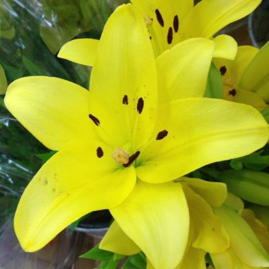 Flowers are thoughtful no matter where you buy them. Guys for their girl, women for their man. Pretty Asia lily bouquet $5.99. #matchmakersays 