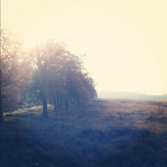 Photo taken at Nationaal Park De Hoge Veluwe by Thomas V. on 11/19/2011
