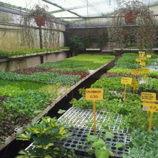 Vivero hortalizas guamasa san crist bal de la laguna for Viveros canarias