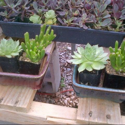 Foto tomada en East Austin Succulents por Nanette L. el 9/5/2012
