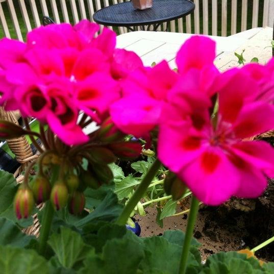 fairless hills garden center flower shop - Fairless Hills Garden Center