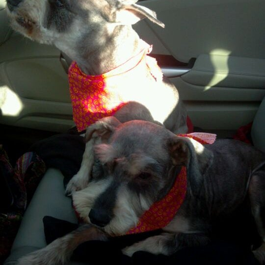 Photo taken at The Groomer by Charity B. on 3/2/2012