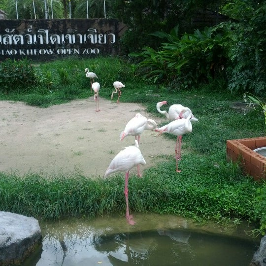 Photo taken at Khao Kheow Open Zoo by Andrey A. on 6/12/2012