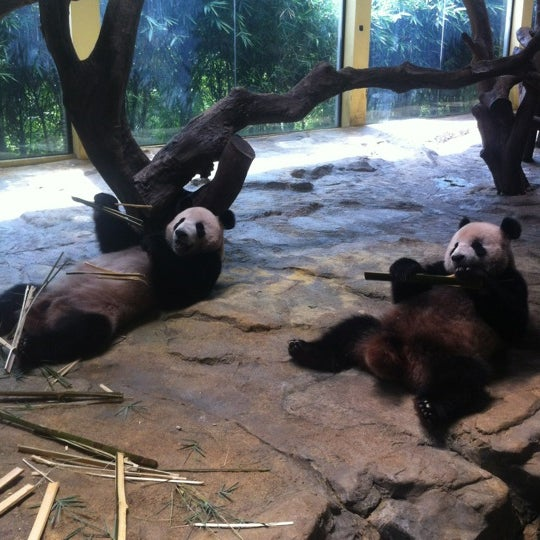 Photo taken at Xiang Jiang Safari Park, Guangzhou by Denis S. on 6/10/2012