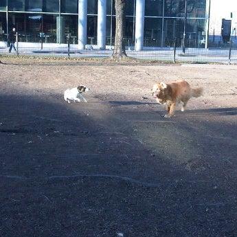 Faire attention aux balles! Veuillez à ce que les chiens ne s'entretuent pas pour leurs jouets... Xx