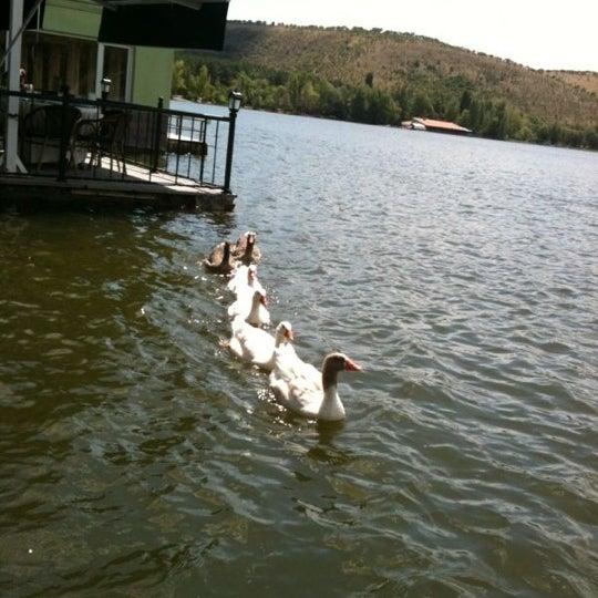 8/5/2012 tarihinde Suat B.ziyaretçi tarafından Orfoz'de çekilen fotoğraf