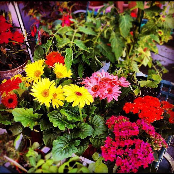 Photo Taken At Armstrong Garden Centers By Danny S On 4 21 2017