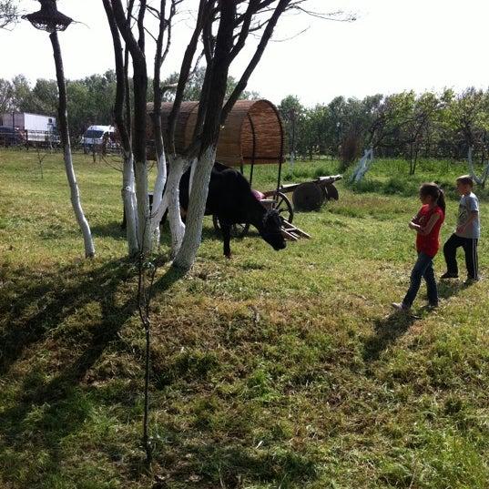 5/5/2012 tarihinde Natali Y.ziyaretçi tarafından AtlıTur At Çiftligi'de çekilen fotoğraf