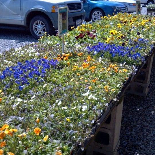 Photos at Burton\'s Farm Market - Olean, NY