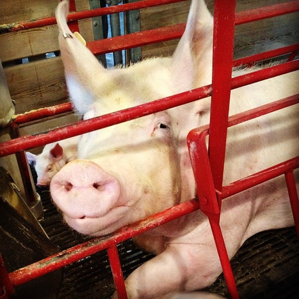 Photo taken at Swine Barn by Kevin N. on 9/2/2012